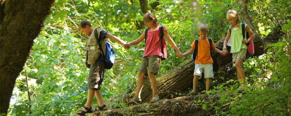 hiking children trees 1024 home page